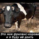 freelance-korova